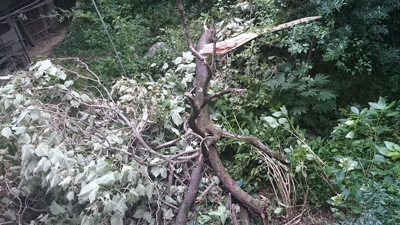 青少年文化研修道場 裏庭の倒木
